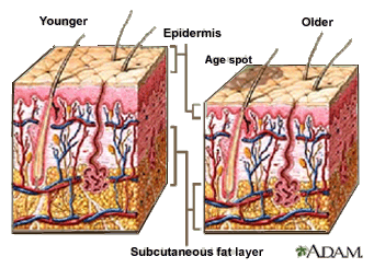[Subcutaneous fat layer]